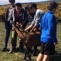 Mai 2017 : les élèves de 4ème  partent à la rencontre du monde professionnel agricole en Minervois.  Avec la réfo